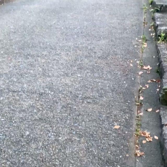 福岡城🏯。大濠公園🦆。