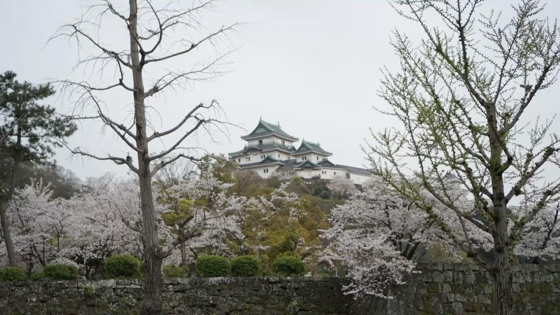 久しぶりの和歌山城へ花見